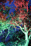 Colorful trees 0002