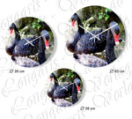 Black swan I Wall clock in 3 sizes